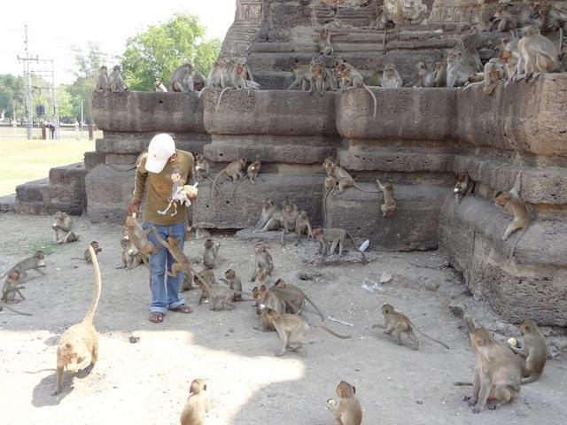 Lopburi, la ville des singes