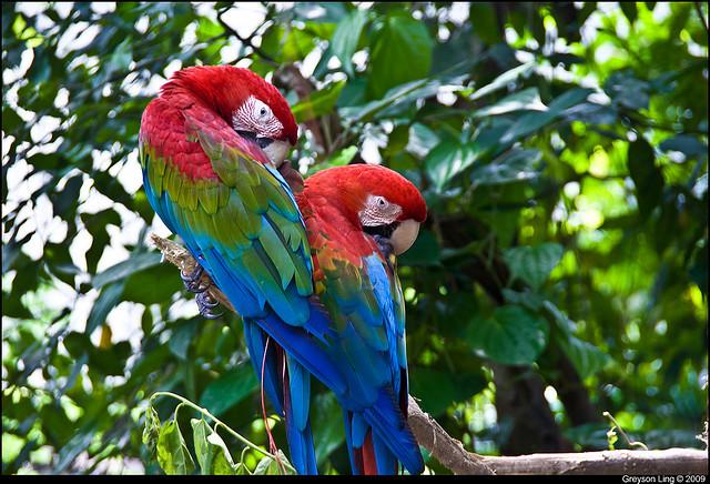 Zoo Singapour
